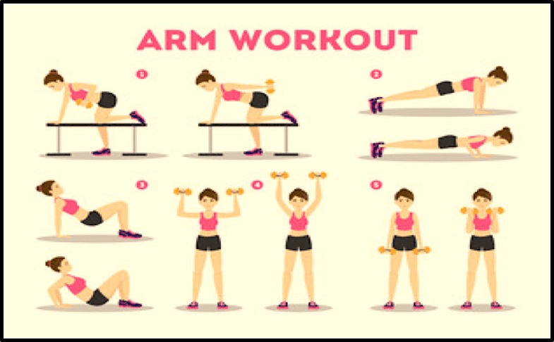 Exercices bras muscles