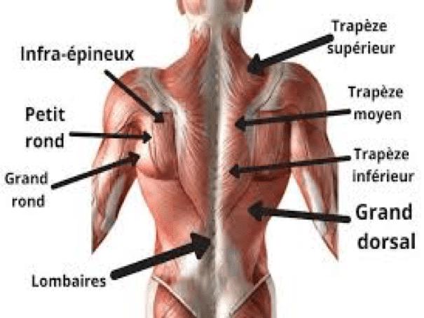 Schema muscles du dos mybigbang